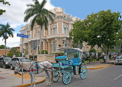 Calesa (horse drawn carriage) in Paseo de Montejo